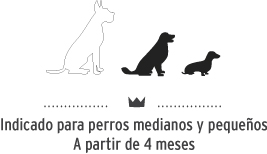 Snacks para perros de tamaño mediano y pequeño.Dog snacks for small and medium breeds.