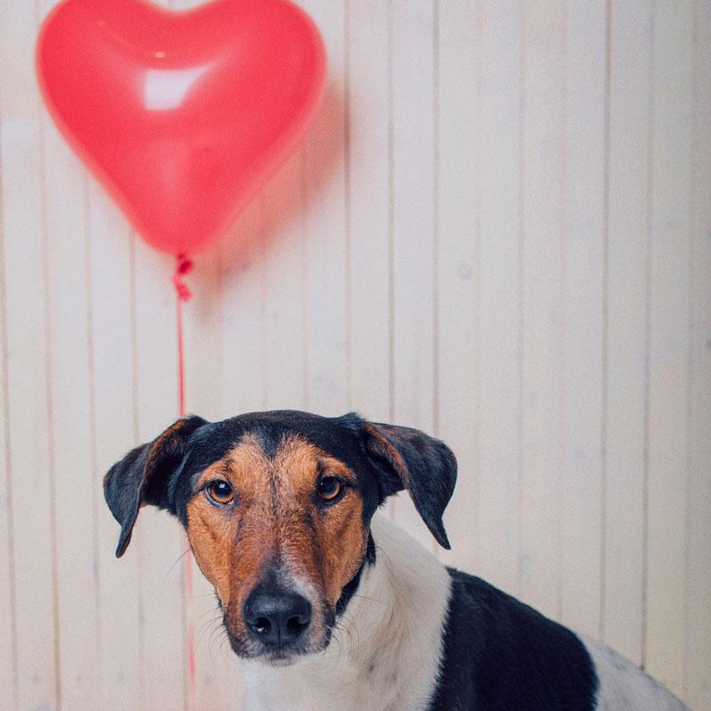 5 actividades con perro en San Valentín