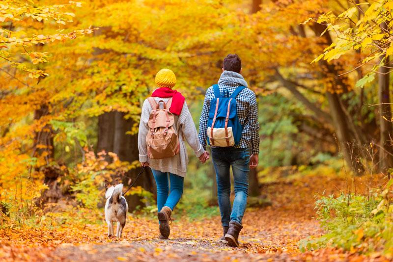 6 actividades con perro para el fin de semana