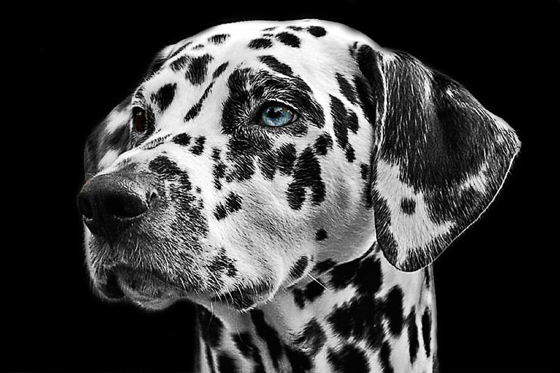 Guía completa de los perros de raza