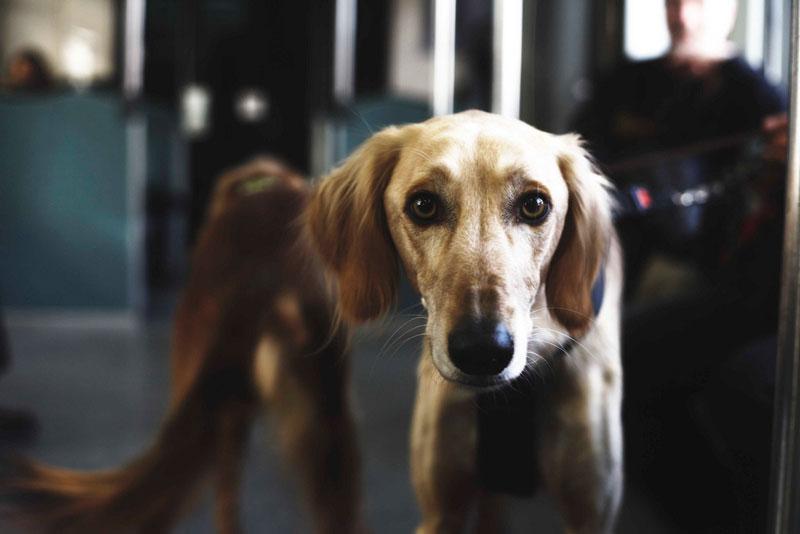 Guía para viajar en metro con perro en España