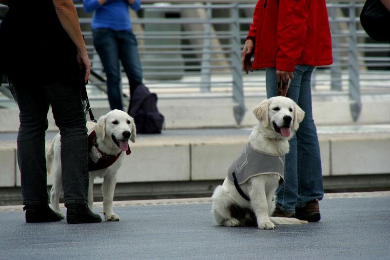 ¿Puedo viajar en metro con perro?