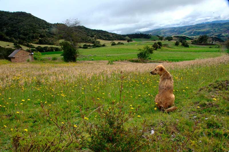 Actividades con perro en Semana Santa