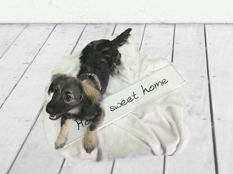 Perros en adopción: Billy