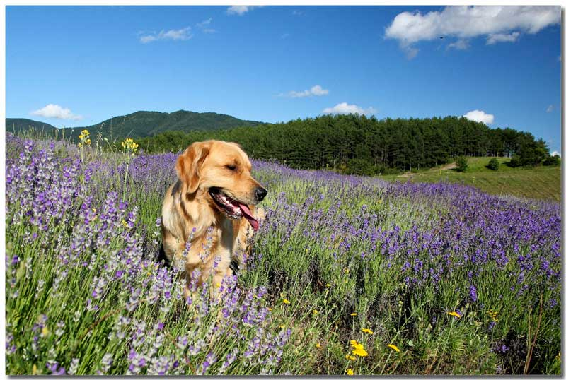 Actividades con perro: ruta guiada por el Albaicín, senderismo, cursos de formación, exposiciones caninas y deporte