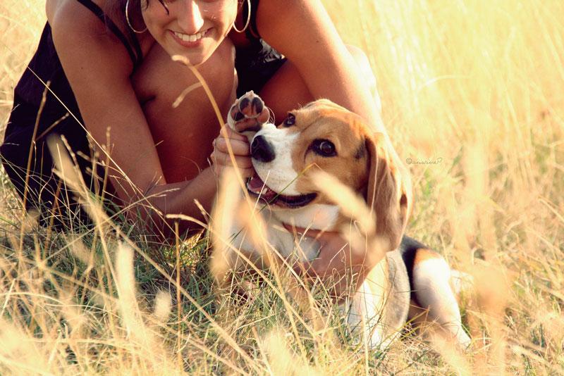 Como tomar el pulso a un perro