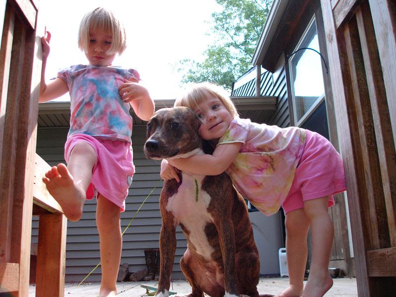 ¿Determina la raza el carácter de un perro?