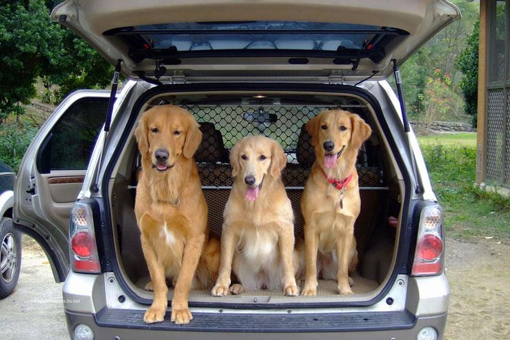 Como-viajar-en-coche-con-perro-recomendaciones-de-la-DGT-2