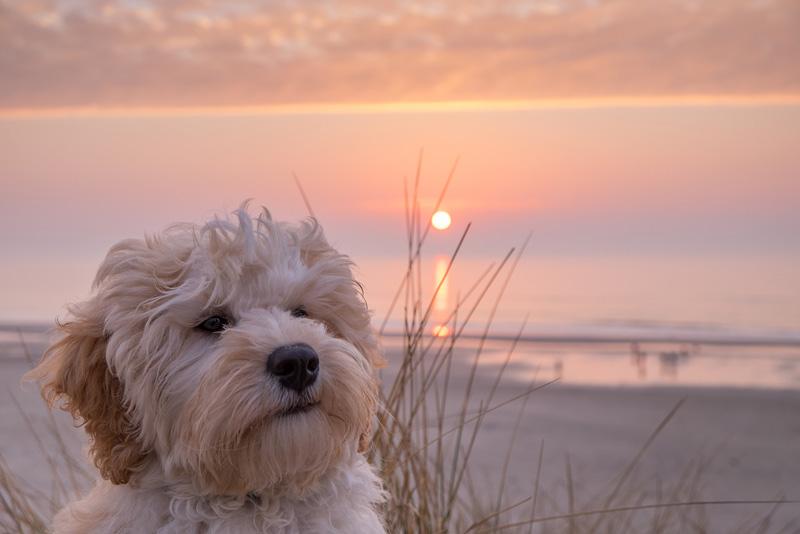playas-para-perros-consejos-utiles