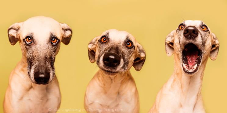 Elke Vogelsang: la fotografa de perros que caza emociones