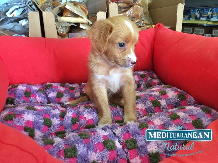 perros-en-adopcion-eevee-no-es-un-pokemon-2