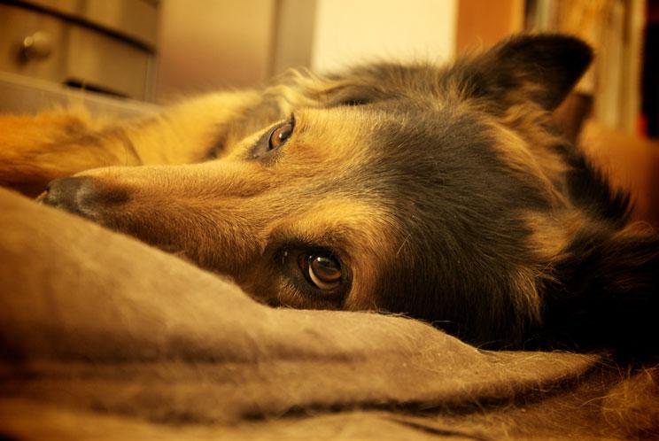 sindrome-postvacacional-en-perros-ansiedad-tristeza-y-depresion-1