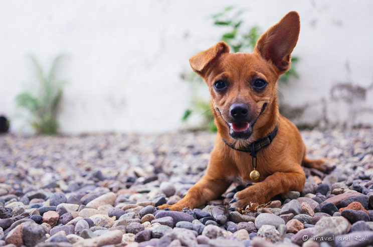 sindrome-postvacacional-en-perros-ansiedad-tristeza-y-depresion-3