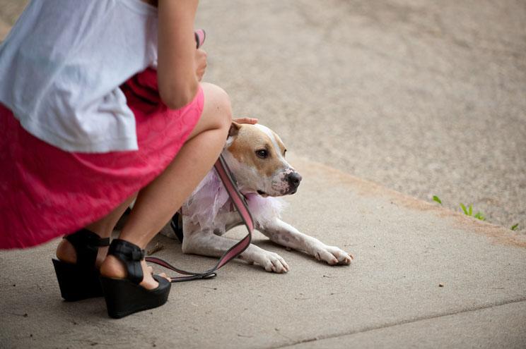sindrome-postvacacional-en-perros-ansiedad-tristeza-y-depresion-4