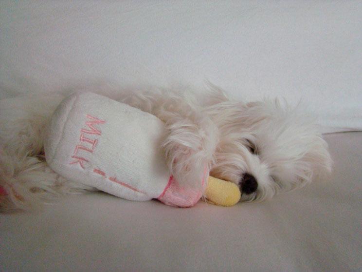 que-hacer-la-primera-noche-de-mi-cachorro-en-casa-2