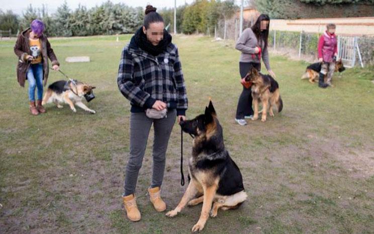 Perros adiestrados contra la violencia machista