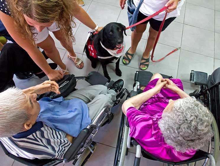 Tango: de perro abandonado y maltratado a perro terapeuta de Cruz Roja