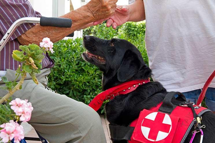Tango: de perro abandonado y maltratado a terapeuta de Cruz Roja