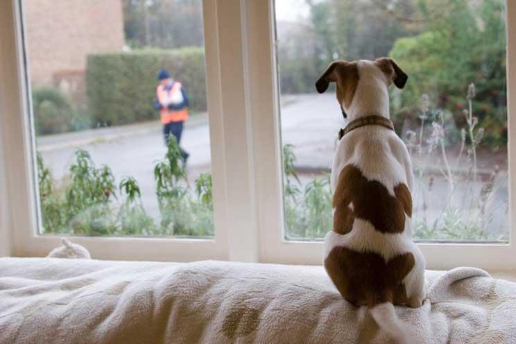 Guía completa de las razas de perros: Jack Russell Terrier