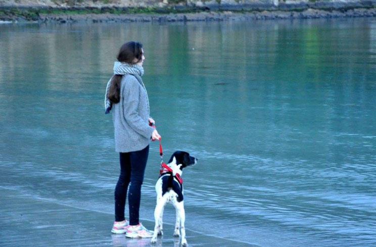 Como-colaborar-si-no-puedo-adoptar-un-perro-3