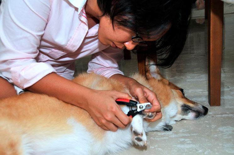 Cómo cortar las uñas a mi perro