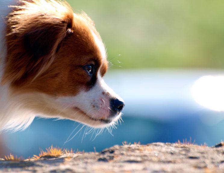 procesionaria-del-pino-peligro-para-los-perros-3
