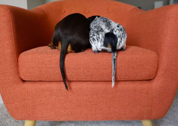 Aprobada la prohibición de cortar la cola a los perros por estética