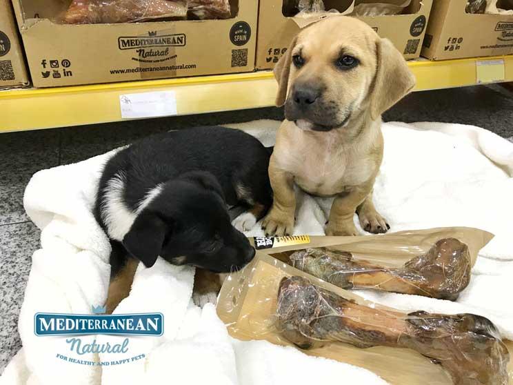 Perros-en-adopcion-canela-y-peludo-amigos-y-residentes-en-alicante-2