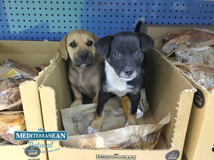 Perros-en-adopcion-canela-y-peludo-amigos-y-residentes-en-alicante-3