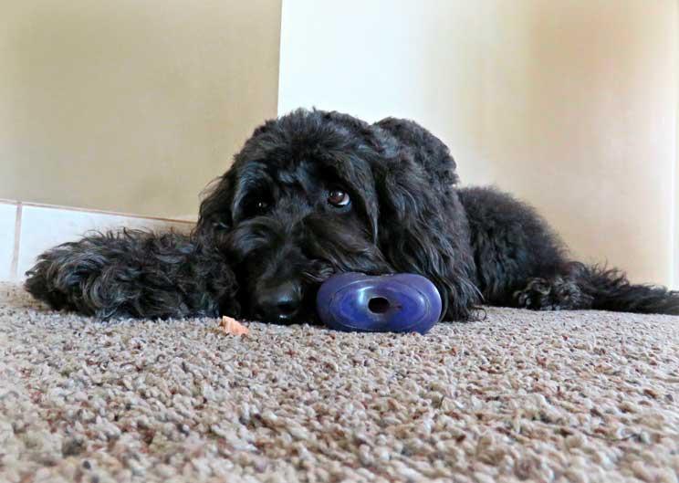 10 trucos para acostumbrar a tu perro a quedarse solo en casa