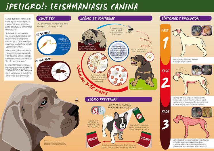 Leishmaniosis: qué es y cómo prevenirla