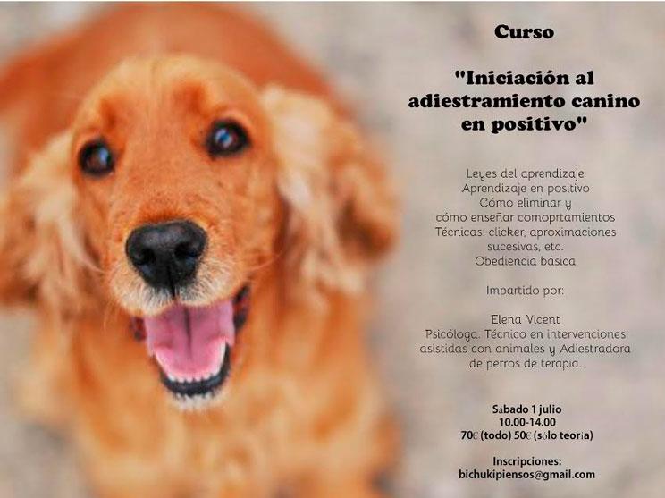 Agenda dogfriendly: 8 actividades con perro en julio que no te puedes perder