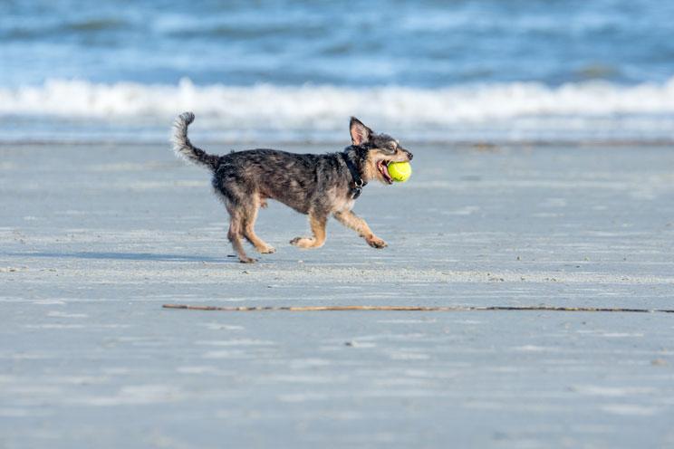 http://www.mediterraneannatural.com/vida-cotidiana/como-viajar-en-coche-con-perro-recomendaciones-de-la-dgt/