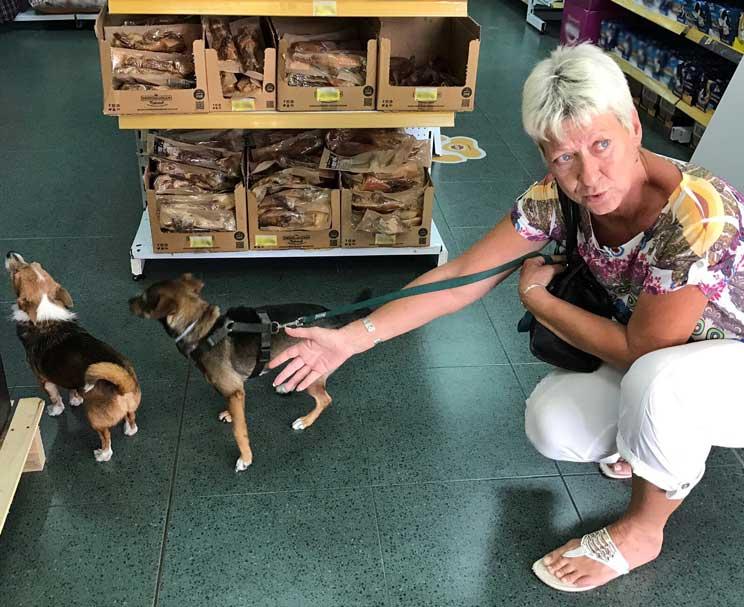 Perros en adopción: Chispa necesita un hogar urgentemente