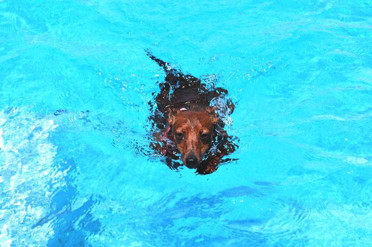 Agenda dogfriendly: 6 actividades para disfrutar este mes de agosto