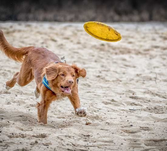 Listado de playas que admiten perros en España