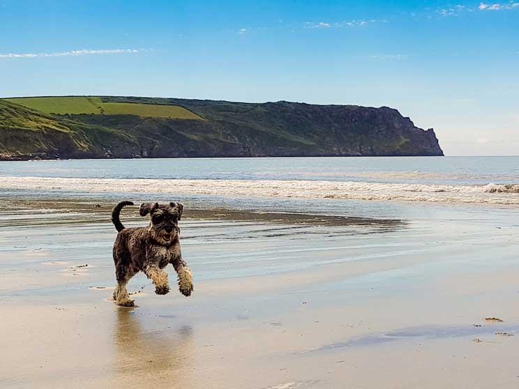 playas de espana que admiten perros