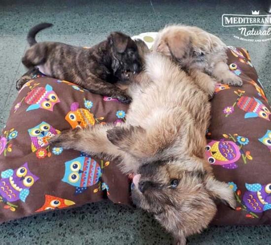 Perros en adopción: Osito y Cucurucho
