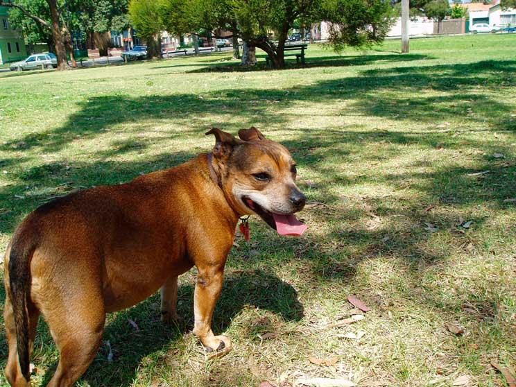 Robo de perros: medidas de precaución para evitarlo