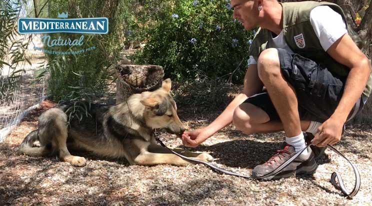 Tutorial de adiestramiento: Cómo enseñar a un perro a tumbarse