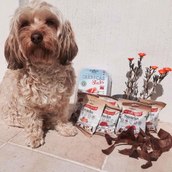 Cómo enseñar a hacer trucos a tu perro: snacks Mediterranean Natural