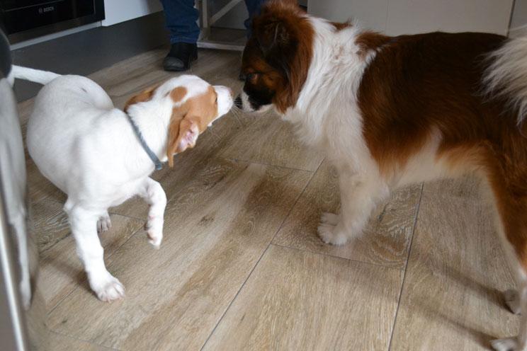 Cuándo y cómo desparasitar a un perro