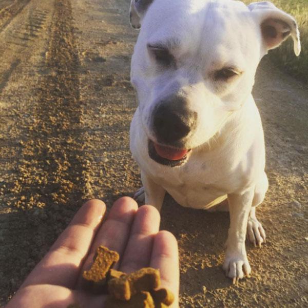 Redes sociales: Nuestro fiel amigo y Serrano Snacks