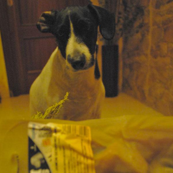 Redes sociales: Perros con Historia y Ham Bones