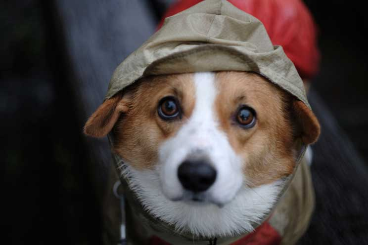 Agenda dogfriendly: actividades con perro en noviembre