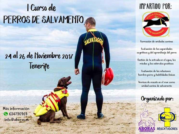 Agenda dogfriendly: actividades con perros en noviembre