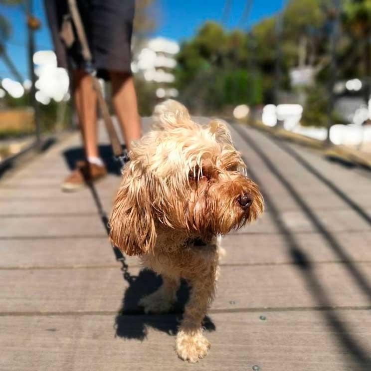 Perros con armario. ¿Beneficia o perjudica al animal?
