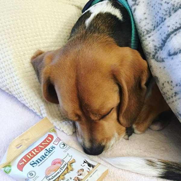 Arya la Beagle y Serrano Snacks de Mediterranean Natural