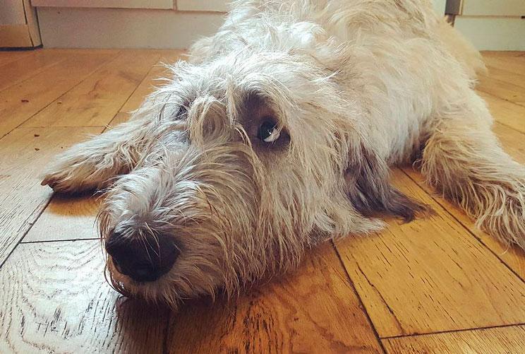 Cómo y cuando debes cepillar a tu perro