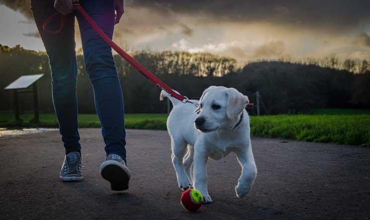 Como-y-cuando-pasear-a-tu-perro-1